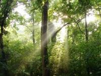 Gemenci erdő